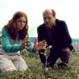 Auf dem GREEN UNPLUGGED online Film Festival kann man LYS in voller Länge sehen. Link: LYS auf CULTURE UNPLUGGED